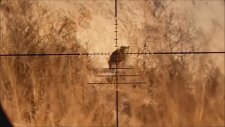 Kalibrgun 22 Cal PCP Havalı Tüfek av Bölüm 1