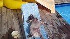 Köpek mi Kedi mi Daha İyi Dosttur? Tartışmasına Son: En İyisi Pug!