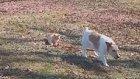Kedilerin Her Şeyin Tek Hakimi Olduğunun Kanıtı