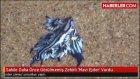 Sahile Daha Önce Görülmemiş Zehirli 'Mavi Ejder' Vurdu