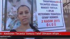 Mersin'de Kediye Tecavüz Edenlere Afişli Protesto