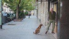 Adam ve Köpeği (Arjantin'den bir Kamu Spotu)