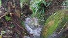 Ordu Karaoluk Köyü - Doğa Videoları - 14