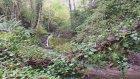 Ordu  Karaoluk Köyü - Doğa Videoları - 9