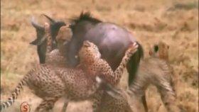 Vahşi bir belgesel - Hayvanlar Alemi Belgesel