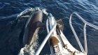 Balıkçı Teknesinin Balina ve Yunuslarla Rüya Gibi Yolculuğu