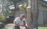 Ağaç Kütüğünü Sanat Eserine Çevirmek