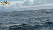 Evrimin Sonuna Gelen Uçan Balıklar