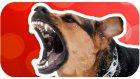 Köpek Saldırdığında Ne Yapmak Gerekir?