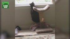 En Komik Kedi Vine Videoları