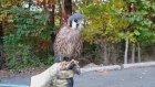 acaip bir kuş