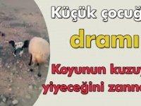 Koyunun Kuzuyu Yiyeceğini Zanneden Küçük Çocuğun Dramı!