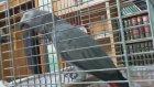 Bu Papağan Çok Farklı