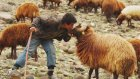 İçtenlik Abidesi Çoban Serkan ile Röportaj