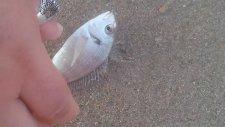 Balık Nasıl salınır