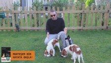 Köpeğiniz ile MUHTEŞEM bir hayat için Pratik Bilgiler