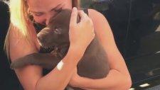Köpek Yardımıyla Evlenme Teklifi Yapmak