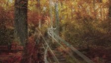Brian Crain - A Walk İn The Forest