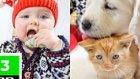 Bebeklerin, Yavru Kedilerin Ve Köpeklerin Şirin Mi Şirin Halleri