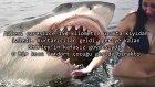 İnanılmaz Köpek Balığı Saldırıları