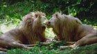 Romantik Hayvanlar