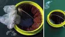 Çöp Kutusu Denizde Yüzerek Temizlik Yapıyor