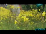 Volkan Konak - Mimoza Çiçeği