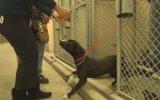 Barınaktan Sahiplendirilen Köpeğin Yaşadığı Büyük Sevinç