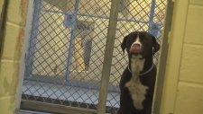 Barınaktan Sahiplenilen Köpeğin Yaşadığı Büyük Sevinç