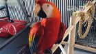 Komik Papağanlar