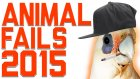 En Saçma ve En Komik 2015'in Hayvan Başarısızlıkları