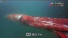 Bugüne Kadar Canlı Görülmemiş En Büyük Kalamar - Japonya