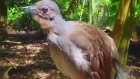 Dünyanın en ilginç kuşu