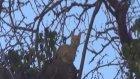 İtfaiye Kurtarmaya Gittiği Kediyi Ağaçta Bıraktı