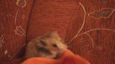 Battaniyeyi Yiyen Hamster