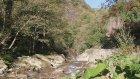 Ordu Karaoluk Köyü - Doğa Videoları - 34