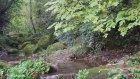 Ordu Karaoluk Köyü - Doğa Videoları - 35