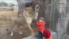 Dev Aslan Bebekle Karşı Karşıya