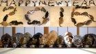 Happy New Year 2016.10 Cats. 10