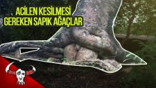 Acilen Kesilmesi Gereken 15 Sapık Ağaç!!!