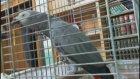 Besmele çeken papağan