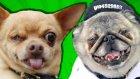 Hangisi Dünyanın En Çirkin Köpeği? - Cezalı Yarışma