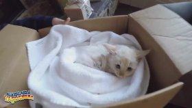 Donmak Üzere Olan Kedi Yavrusunun Hayata Tutunuşu (Ağlatır)