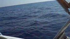 Adrasanda Akya (Kuzu) balığı nasıl avlanıyor
