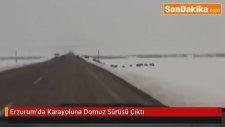 Erzurum'da Domuz Sürüsü Karayoluna  Çıktı