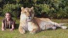 Kedi Sevenlerin Bayılacağı 15 İlginç Fotoğraflı Bilgi