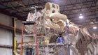 Yaşamış En Büyük Kara Hayvanı 'Titanosaur'un İskeleti!