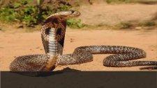 Dünyanın En Zehirli 10 Hayvanı