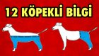 Köpekler ile İlgili 12 İlginç Fotoğraflı Bilgi