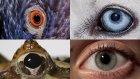 Hayvanlar ve İnsanlar Dünyayı Nasıl Farklı Görürler?
